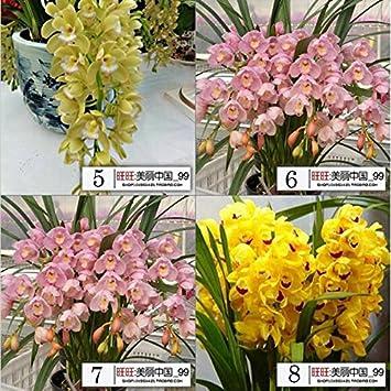200 / Beutel, 16 Arten gemischt Haar Orchidee-Blumen-Samen ...