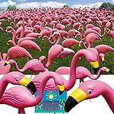 Bloem Pink Flamingo 25'' Statue (50-Pack)