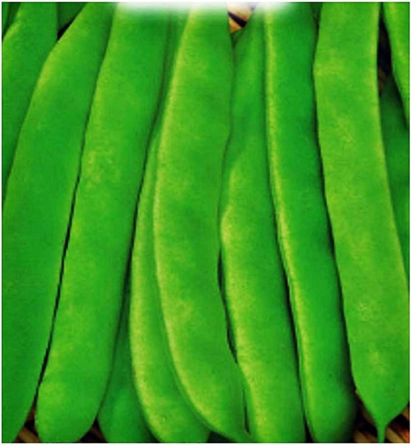 Semillas de frijol de Nassau - verduras - phaseolus vulgaris - fg021 - las mejores semillas de plantas - flores - frutas raras - frijoles - idea de regalo original - aproximadamente 400 semillas