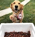 University of Oklahoma Sooners Dog Bandana (LARGE: 14-20 inches)