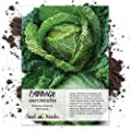 Seed Needs, Savoy Perfection Cabbage (Brassica oleracea) 300 Seeds Non-GMO