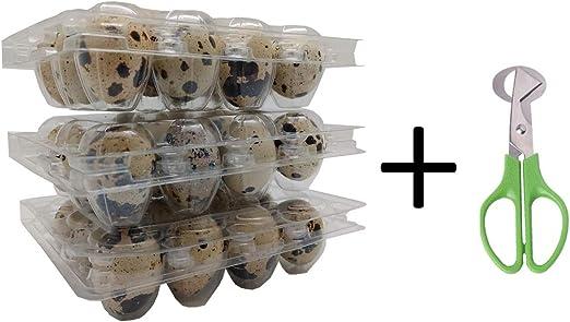 Hold 12 eggs small .. 1 dozen - FREE 2 Day Ship Quail Egg Cartons 50 pieces