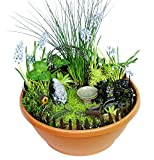 Echo Valley 6220 Gnome Garden Starter Accessory Kit For Sale