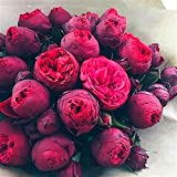 HOO PRODUCTS - Bonsai Rare Chinese Peony Seeds Planting Of Greenery And Flowers Terrace Courtyard Garden Paeonia Suffruticosa Seeds 10 Pcs New Arrival !