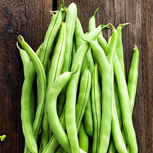 Contender Bush Bean Seeds - 1 Lb - Non-GMO, Heirloom - Also Called Buff Valentine - Vegetable Garden Seeds