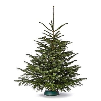 Weihnachtsbaum Nordmanntanne.Echter Premium Weihnachtsbaum Frisch Geschlagen Höhe Ca 170 Bis 180 Cm Nordmanntanne Christbaum Der Große Karl Handverlesen Aus Deutschland