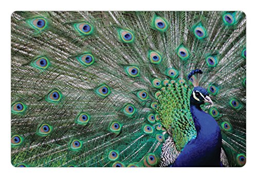 Lunarable Peacock Pet Mat for Food and Water, Peacock Displaying Elongated Majestic Feathers Open Wings Picture, Rectangle Non-Slip Rubber Mat for Dogs and Cats, Navy Blue Green Pale Brown (Peacock Feathers Displaying)