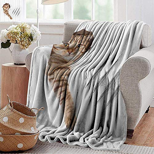 - PearlRolan Throw Blanket,Animal,Funny Cat in Wallpaper Hole with Claw Scratches Playful Kitten Cute Pet Picture,Brown White,300GSM,Super Soft and Warm,Durable Blanket 60
