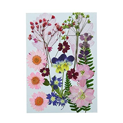 Uokwiwi Real Dried Pressed Flowers Assorted Colorful Daisies Leaves  Hydrangeas for Art Craft DIY - 1 Pack Size 3