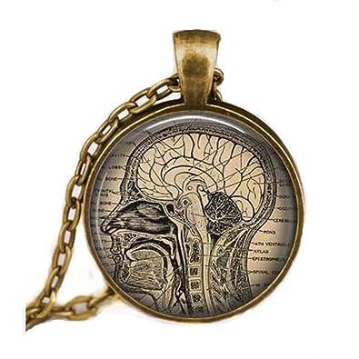Amazon.com: En Venta Collar Cerebro anatómico, cerebro ...