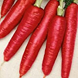 buy Everwilde Farms - 1000 Atomic Red Carrot Seeds - Gold Vault Jumbo Seed Packet now, new 2018-2017 bestseller, review and Photo, best price $2.50