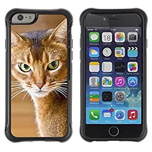 Suave TPU Caso Carcasa de Caucho Funda para Apple Iphone 6 / American Shorthair Angry Cat / STRONG