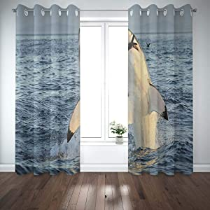 Shorping 52X84 Inch 3D Window Curtains, Privacy Window Curtain Great White Shark in Attack on Seal South Africa Carcharias Breaching an Window Blackout Curtains for Bedroom,2 Pc