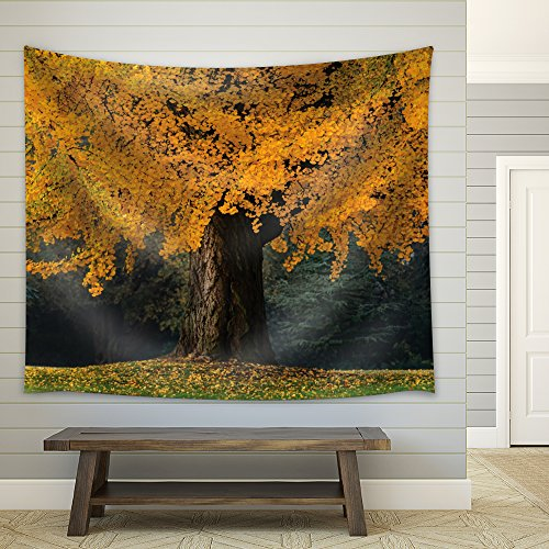 Large Gold Tree with Fallen Leaves During Fall Time