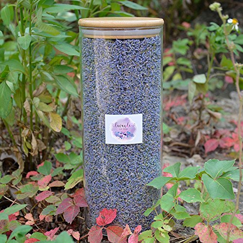 D'vine Dev Lavande Sur Terre Naturally Dried Lavender Flowers Ultra Blue Culinary Grade Highland Grow Dried Lavender Seeds with Easy Resealable Huge Glass Bottle