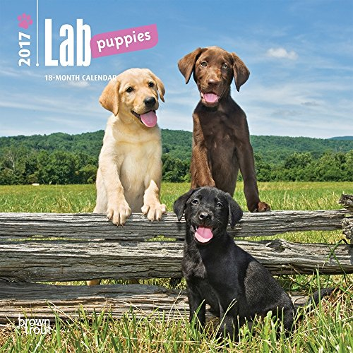 Lab Puppies 2017 Small Wall Calendar