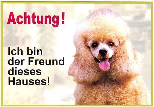 ` Ich bin der Freund dieses Hauses `Verwendbar im Innen und Au/ßenbereich WARNSCHILD Chihuahua 038 ca 21 x 15 cm laminiert wasserabweisend Motiv