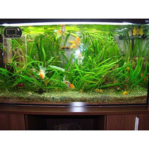 Mokoqi Fish Tank Digital Aquarium Thermometer For Hydroponics