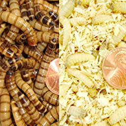 250 Waxworms and 250 Superworms Live Pet Food COMBO