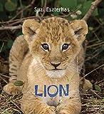 Eye on the Wild: Lion