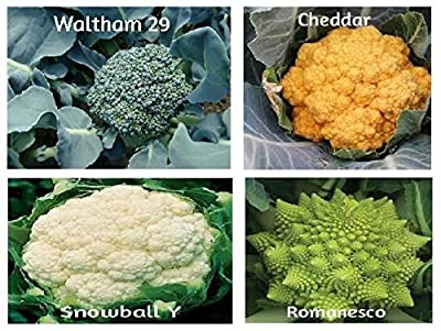 Organic Broccoli Cauliflower Seed Variety by Bluseeds