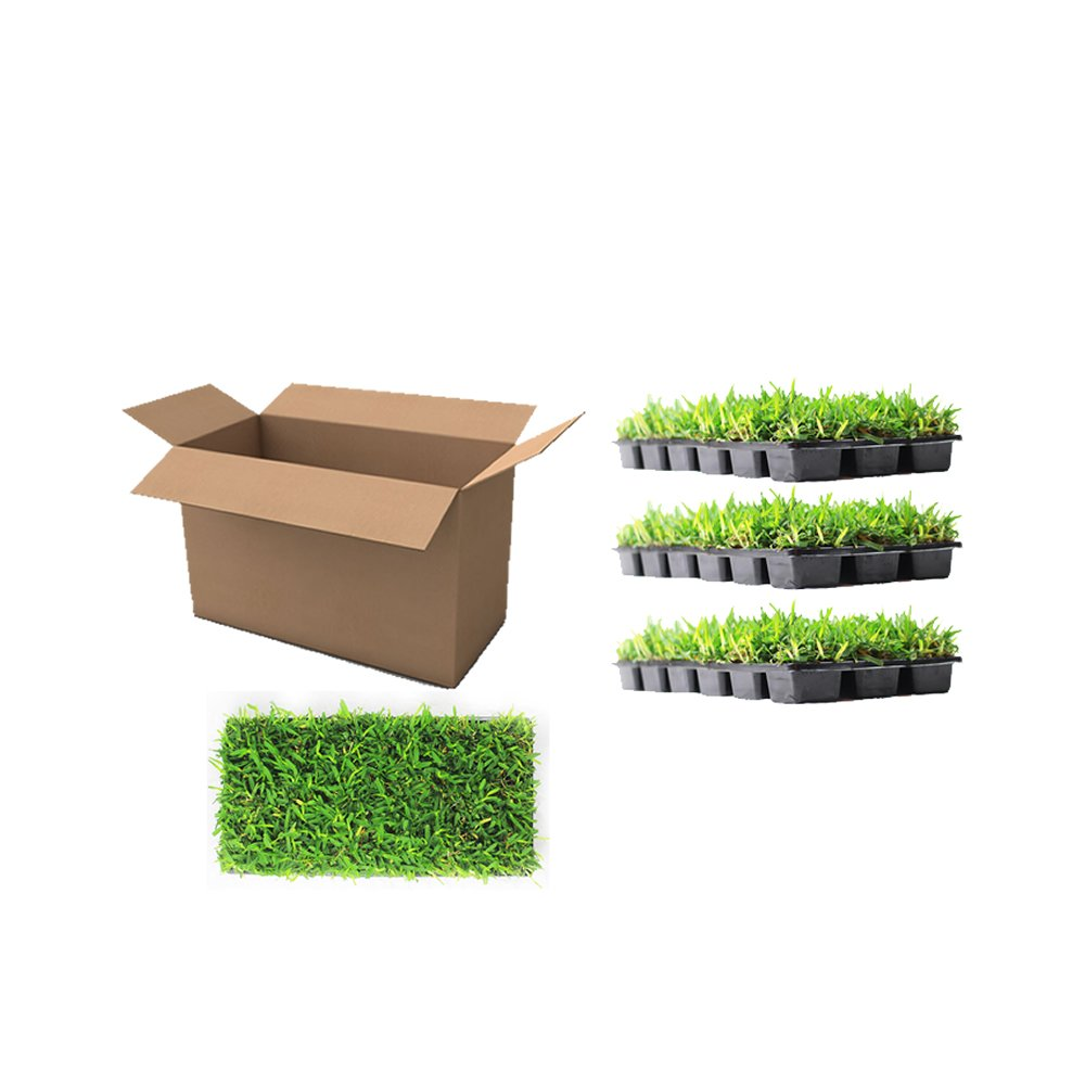 Floratam St. Augustine Grass Plugs / Box of 72