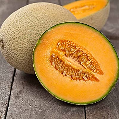 Cantaloupe Melon Garden Seeds - Imperial 45 - Non-GMO, Heirloom, Vegetable Gardening Seeds - Fruit