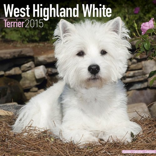 West Highland Terrier Calendar - Breed Specific West Highland Terrier Calendar - 2015 Wall calendars - Dog Calendars - Monthly Wall Calendar by Avonside