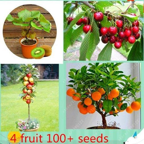 4 kind fruit ,bonsai fruit tree seeds ,vegetable and fruit seeds kiwi cherry apple orange total 100+ seeds Non-GMO garden plant 4 kind fruit