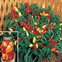 Park Seed Sweet Pickle Organic Pepper Seeds