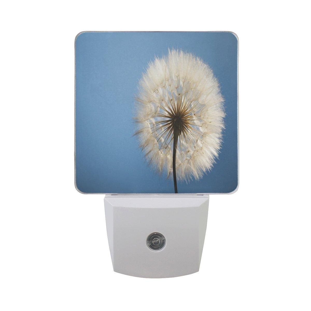 プラグインLED夜ライトランプBigタンポポ印刷with Dusk to Dawnセンサーのベッドルーム、バスルーム、廊下、階段、2 pack-0.5 W B07CV9R2JD