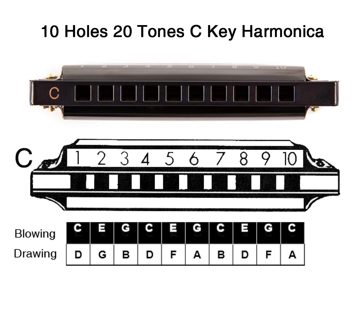 JSL Harmonica, Standard Diatonic Key of C 10 Holes 20 Tones Blues Mouth Organ Harp For Kids, Beginners, Professional, Students (Blues) by jieshiling (Image #3)
