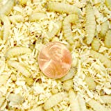 500ct Live Waxworms, Pet Food, Fishing