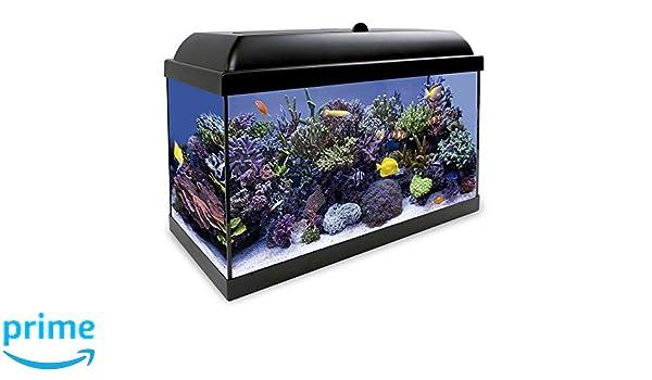 ICA KHS80N Kit Hydra 80 para Agua Salada: Amazon.es: Productos para mascotas