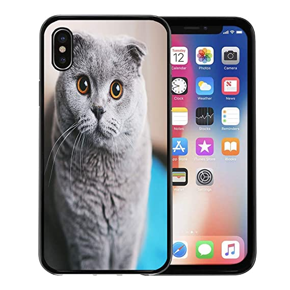 Semtomn Phone Case for Apple iPhone Xs case,Gray Face Scottish Fold Cat  Closeup Looking