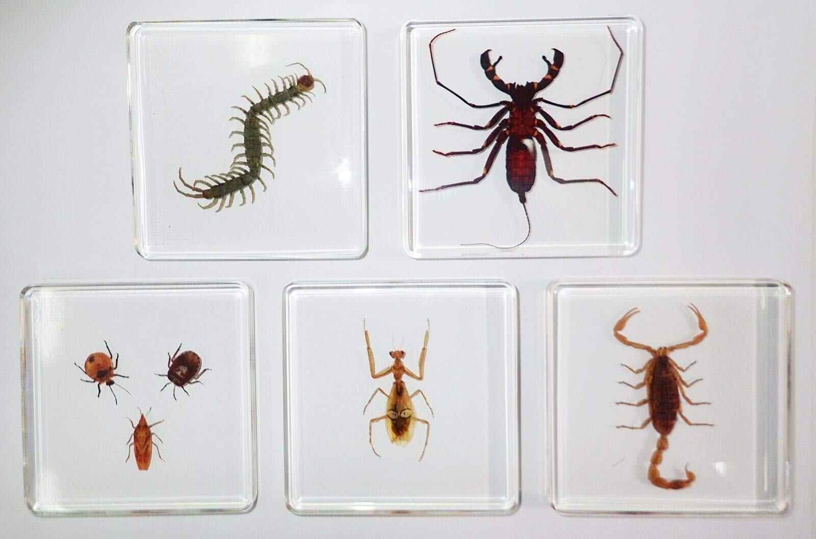Siam Insects 7 Insect Specimen Box Set in 5 Clear Square Slide Block Education Kit