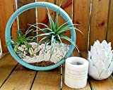 Metal Wall Hanging Planter for Wall Decoration - Unique & Fashion Wall Mounted Planter(Blue)