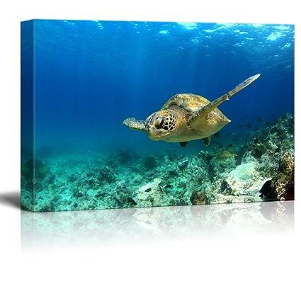 b7095f8b9e5 Amazon.com  Wall26 - Green Sea Turtle in Deep Ocean Sea - Canvas Art Wall  Decor - 16