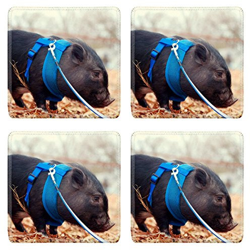 Luxlady Square Coaster Pot bellly pig on leash IMAGE 21423483 Customized Art Home Kitchen (Pig Pot Price Belly)