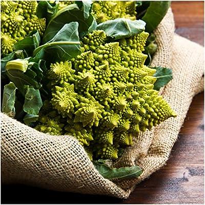 350 Seeds, Romanesco Broccoli (Brassica oleracea) Non-GMO Seeds by Seed Needs