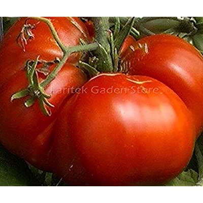 Seeds Market Rare Super Red Giant Competition Tomato seeds, 100 seeds, professional packaging, large Zach family's tomato : Garden & Outdoor