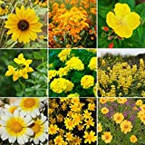 Ole Yeller - Exclusive Yellow Wildflower Seed Mix - 10 Pounds, Yellow