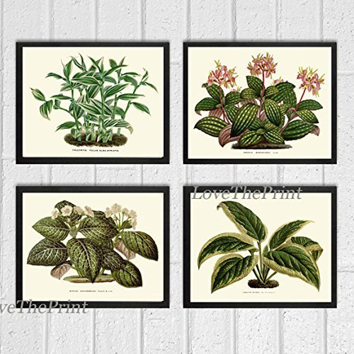 house-plant-print-set-of-4-antique-beautiful-botanical-green-leaf-blooming-flowers-nature-home-room-