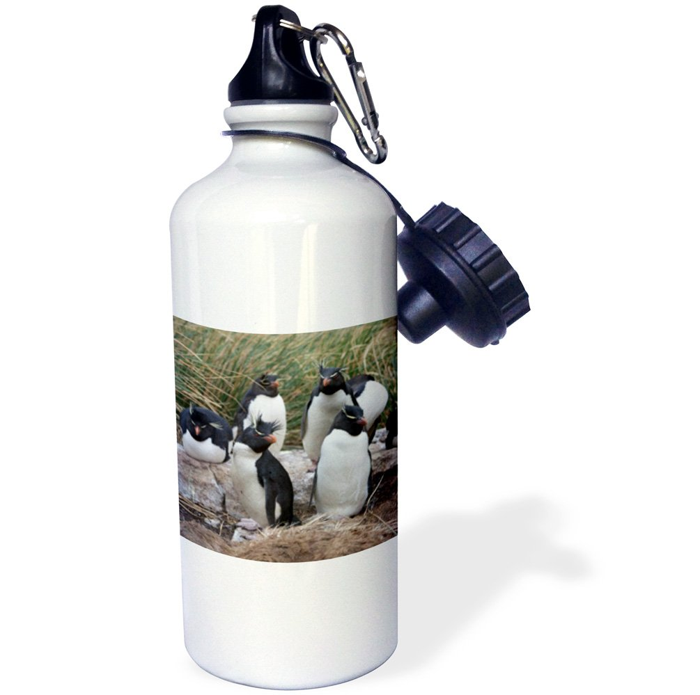 21 oz 3dRose wb/_141183/_1Rockhopper penguins West Point Island White Falklands SA09 HRO0046 Hugh Rose Sports Water Bottle