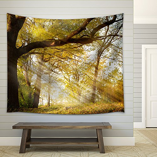 wall26 - a Huge Old Oak Tree in Autumn Park Lighted Sun Sunrise - Fabric Wall Tapestry Home Decor - 68x80 inches