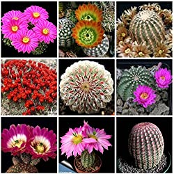 100 SEEDS Mix Beauty Echino SpeciesCactus