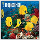 Tropical Fish 2017 Square