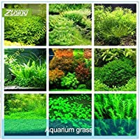 Seeds Package Not Plants: 5 : Zlking 1000Pcs New Aquarium Grass (Mix) Water Aquatic Seeds Family E