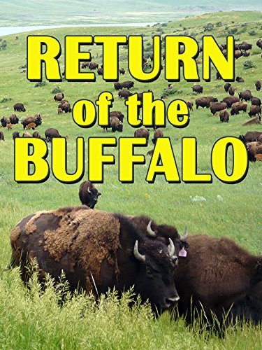 Return Of The Buffalo: Restoring The Great American ()