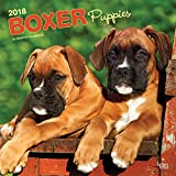 Boxer Puppies 2018 12 x 12 Inch Monthly Square Wall Calendar, Animals Dog Breeds Puppies